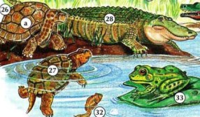 فيش٪ 2C٪ 20SEA٪ 20ANIMALS٪ 2C٪ 20AND٪ 20REPTILES 13 مڇي، سمنڊ جا جانور، Reptiles animals